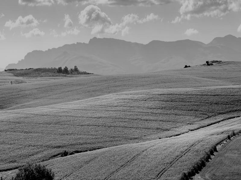 agriculture countryside blackwhite